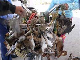 Ngăn chặn hành động tận diệt chim trời
