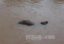 Phó Thủ tướng Trịnh Đình Dũng đến Quảng Bình chỉ đạo ứng phó lũ lụt
