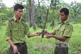 Kiểm lâm Vườn QG Yok Đôn tháo dỡ bẫy thú rừng