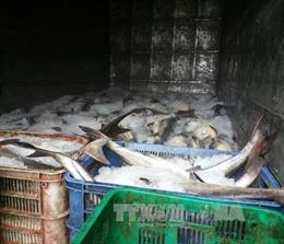 Cá nuôi lồng bè ở Vũng Tàu chết do thiếu oxy