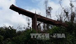 Kon Tum kỷ luật cán bộ để xảy ra vụ phá rừng phòng hộ