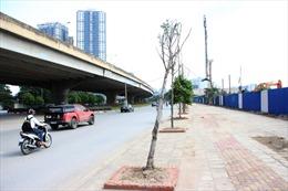 Khẩn trương trồng thay thế cây chết tại Nguyễn Xiển - Nghiêm Xuân Yên