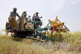Thái Lan nỗ lực ổn định thị trường lúa gạo