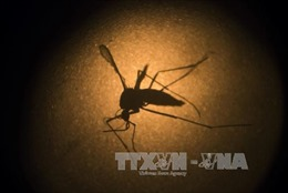 Mỹ thử nghiệm vaccine phòng virus Zika trên cơ thể người