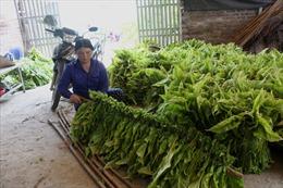 Phụ nữ Nam Tuấn thi đua phát triển kinh tế