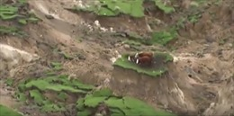 """Giải cứu đàn bò kẹt trên """"ốc đảo"""" tí hon sau động đất"""