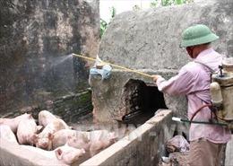 Thừa Thiên - Huế không có dịch lợn tai xanh
