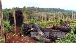 Điều tra, xử lý vụ phá rừng, lấn chiếm đất ở huyện Tuy Đức, Đắk Nông