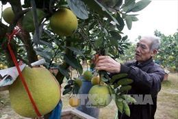 Hợp tác xã là nền tảng đảm bảo vai trò chủ thể của nông dân