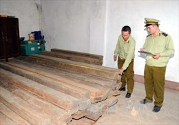 Đổ 8 m3 gỗ nghiến xuống đường rồi lái xe tháo chạy