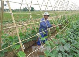 Xuất cấp hạt giống cây trồng hỗ trợ Sơn La và Thừa Thiên - Huế