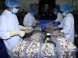 Lộ diện danh sách 310 doanh nghiệp xuất khẩu uy tín
