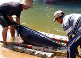 An toàn cá heo trong khai thác cá ngừ