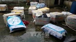 Phát hiện 600kg lợn sữa bốc mùi hôi thối, không giấy kiểm dịch