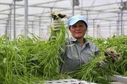Giúp nhà nông tiêu thụ sản phẩm