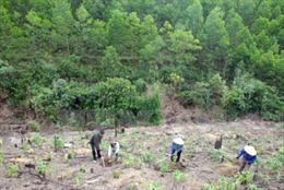 Đổi mới trong giao, cho thuê đất rừng