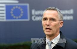 NATO tái khẳng định không can dự cuộc chiến ở Syria