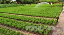 Gia Lai quy hoạch 350 ha trồng rau an toàn