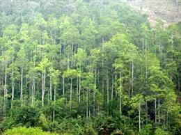 Bộ trưởng Nguyễn Xuân Cường: Rừng đặc dụng, phòng hộ là lõi của phát triển bền vững