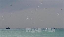 Nga loại trừ yếu tố khủng bố trong vụ rơi máy bay Tu-154