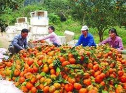 Đổi thay cuộc sống từ trồng cam