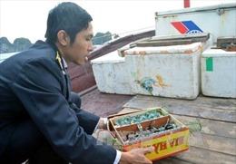 Sử dụng kích điện tận diệt thủy sản trên vịnh Hạ Long