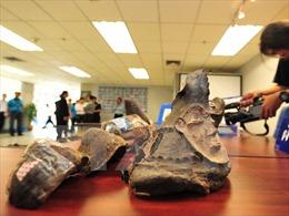 Vận chuyển hơn 50 kg sừng động vật nghi là tê giác
