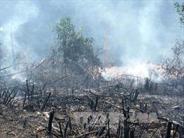 Cháy rừng keo ở Quảng Ninh