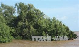 Tìm lời giải cho bài toán giữ rừng ngập mặn ở Bà Rịa - Vũng Tàu