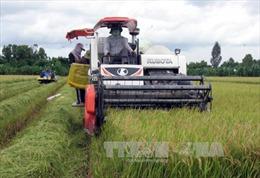 Tiền Giang mở rộng diện tích cánh đồng lớn