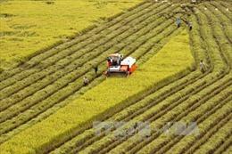 Ba nhóm sản phẩm chủ lực được ngành nông nghiệp ưu tiên