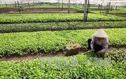 'Đầu tàu' trong kết nối tiêu thụ nông sản sạch - Bài 1: Phát triển chưa xứng tầm