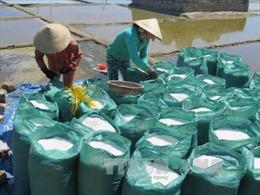 Hơn 43.000 tấn muối tồn kho