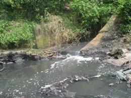 Nguồn nước sinh hoạt đen kịt và bốc mùi hôi tanh, nghi do trang trại lợn