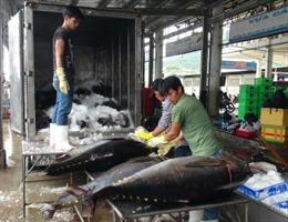 Niềm vui chuyến đi biển câu cá ngừ đầu năm 2017