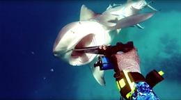 Tấn công ngư dân, cá mập bị đáp trả thích đáng