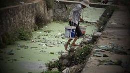 Giữa Thủ đô, rùng mình tưới rau sạch bằng nước thải độc hại