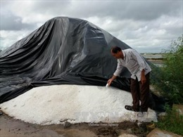 Bài 1: Hạt muối chưa nuôi nổi người làm muối