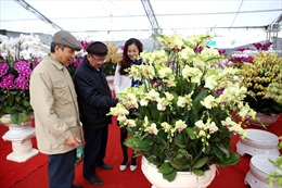 Khac mại Hội chợ nông sản Xuân Đinh Dậu