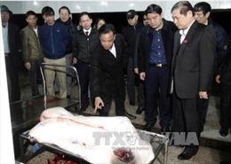 Đoàn giám sát của Quốc hội kiểm tra an toàn thực phẩm tại Thanh Hóa
