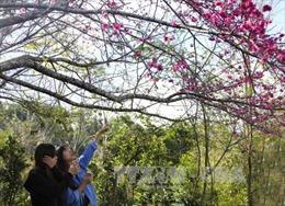 Các tour du lịch mới hút khách dịp Tết