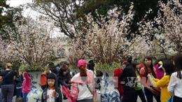 Cơ hội chiêm ngưỡng rừng hoa xuân đua sắc nơi cửa Phật