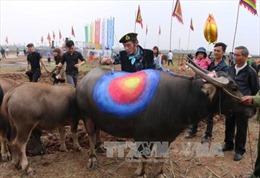Tưng bừng những lễ hội đầu Xuân Đinh Dậu