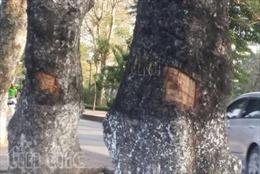 Vận động người dân trên các tuyến phố bảo vệ cây xanh