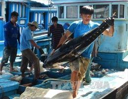 Tết muộn sung túc của ngư dân