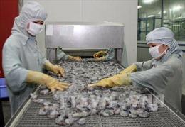 Phản hồi về lệnh Australia ngừng nhập khẩu tôm chưa nấu chín