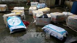 'Tuồn' lợn sữa chưa qua kiểm dịch vào TP Hồ Chí Minh tiêu thụ
