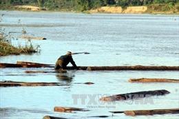 Vứt bỏ 50 phách gỗ lậu trên sông khi chạm mặt cảnh sát đường thủy