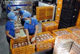 Năm 2017 nhập khẩu không quá 8.400 tá trứng gia cầm từ Liên minh Á - Âu