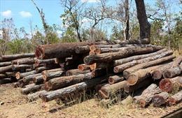 Thu giữ hàng trăm mét khối gỗ trên địa bàn huyện Ea Súp, Đắk Lắk